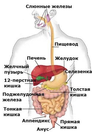 мониторное очищение кишечника в спб